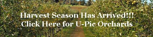 Harvest-season-3