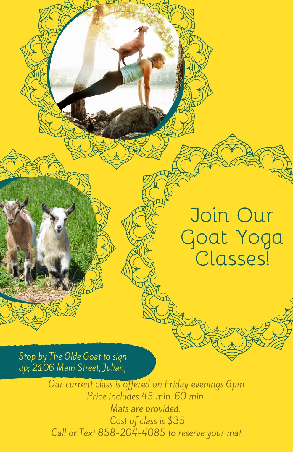 Join Our Goat Yoga Classes_photo